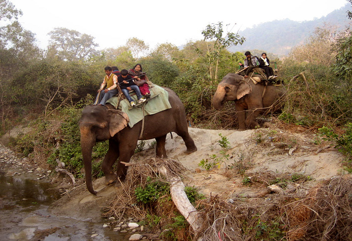 MARVEL AT THE WILD ELEPHANTS IN NATIONAL PARK